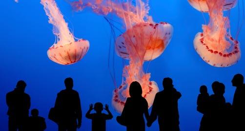 301 moved permanently Entradas aquarium valencia